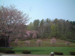 Sakura6_4